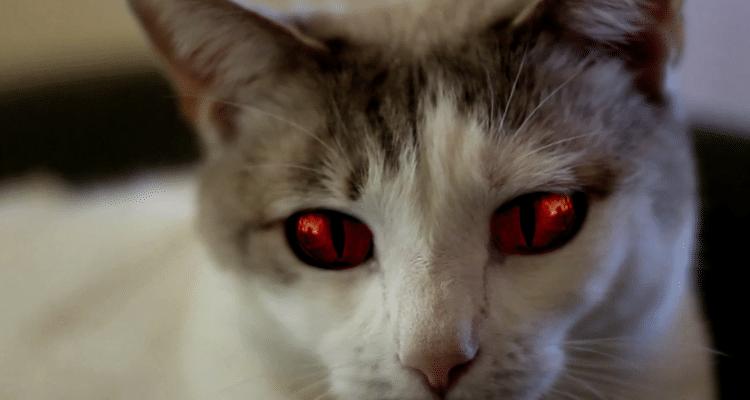 films dhorreur e 2018 avec chats